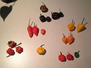 Peppers on a Table